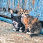 猫は仕事の辛さを癒してくれる⁈初めて猫を飼うのに用意するもの